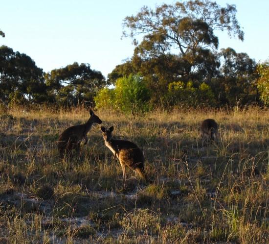 Latitudes-Vagabondes-Australie-07